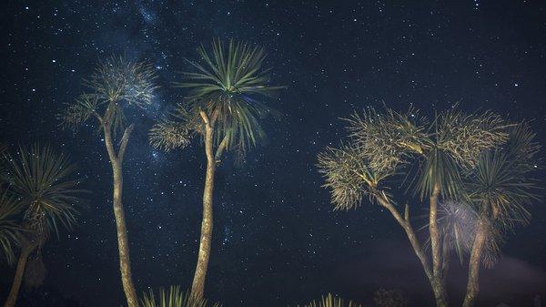 Kew Gardens Starry Night (detail)