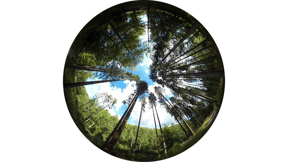 A hemispherical view of Grizedale Forest