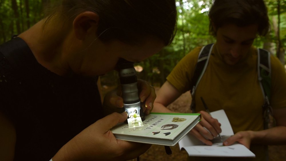 Observing the forest through a microscopic lens in a workshop led by Constance Mahoney and Olivia Sullivan.