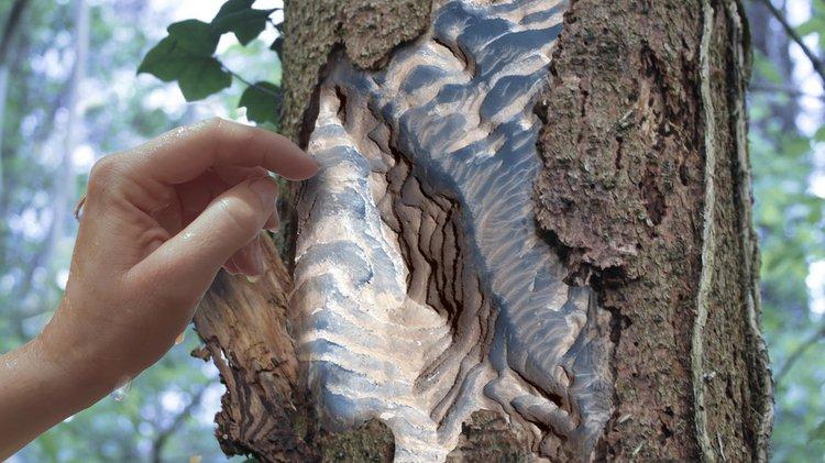 hand peels at tree bark