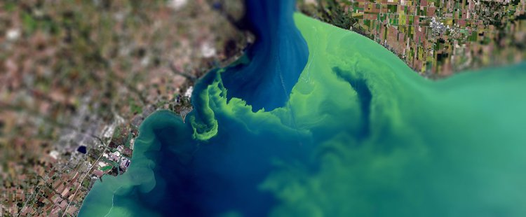 Cyprian Boateng, A Bloom in Disruption (ADS3, RCA 2019/20) investigated cyanobacteria and how synthetic fertiliser discharge is suffocating the Great Lakes. A satellite view of a 2017 harmful algal bloom in Lake Erie. Photo: NASA Earth Observatory