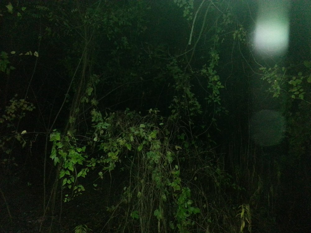 Forest Unseen 1