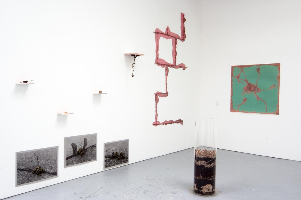 The Worm Turns . Installation View