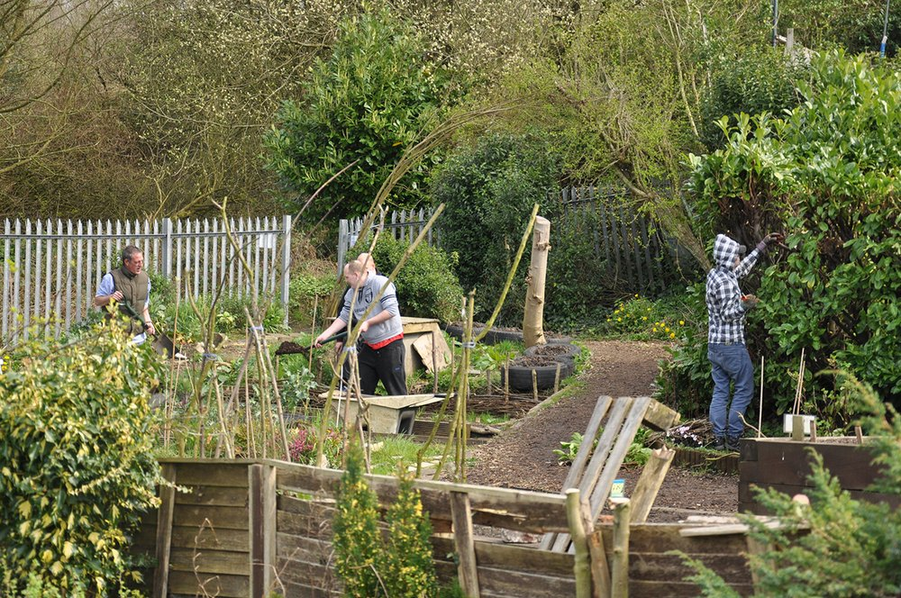 Open Green (A Project for Mind): Observing At The Allotments