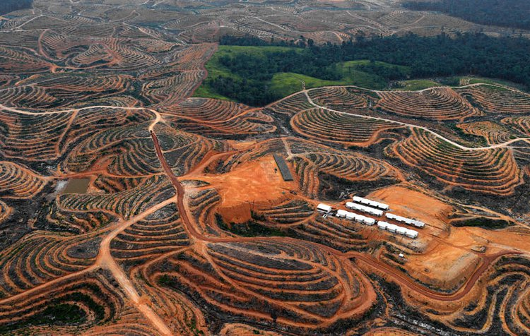 An area cleared for an oil palm plantation in Central Kalimantan Province, Borneo