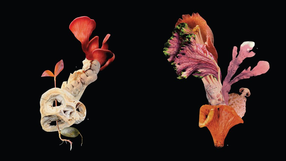 Flora Mendacium