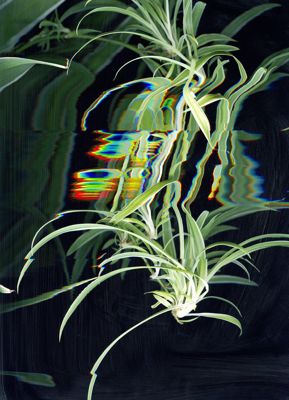 Plantlife 4