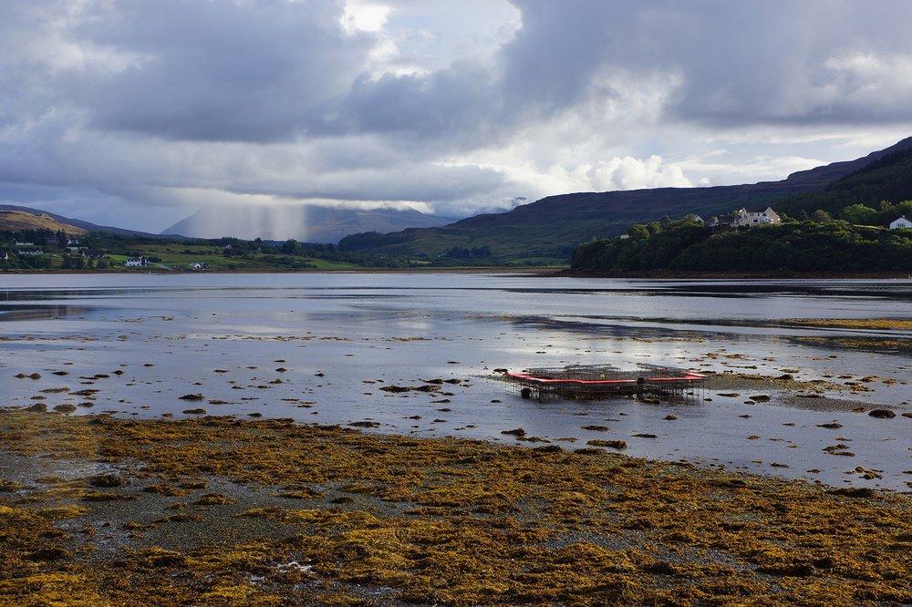 Climavore On Tidal Zones