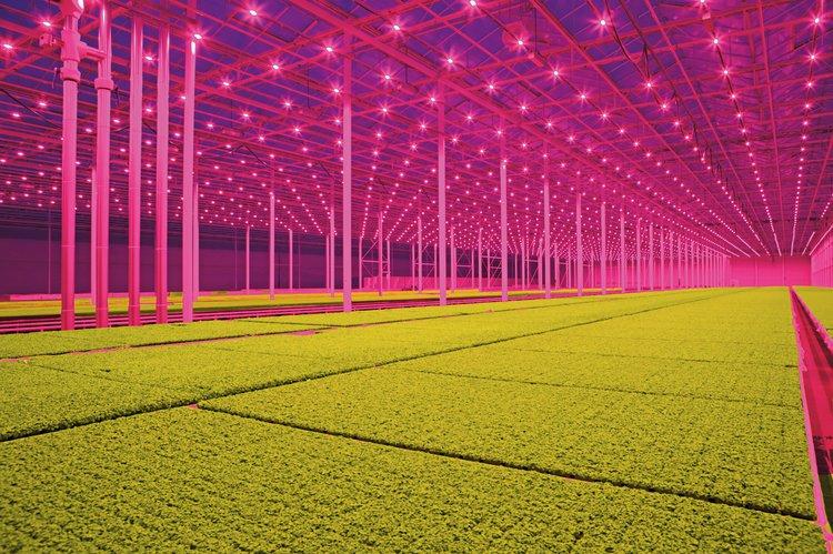LED lighting, Koppert Cress. Photo: Jan van Berkel