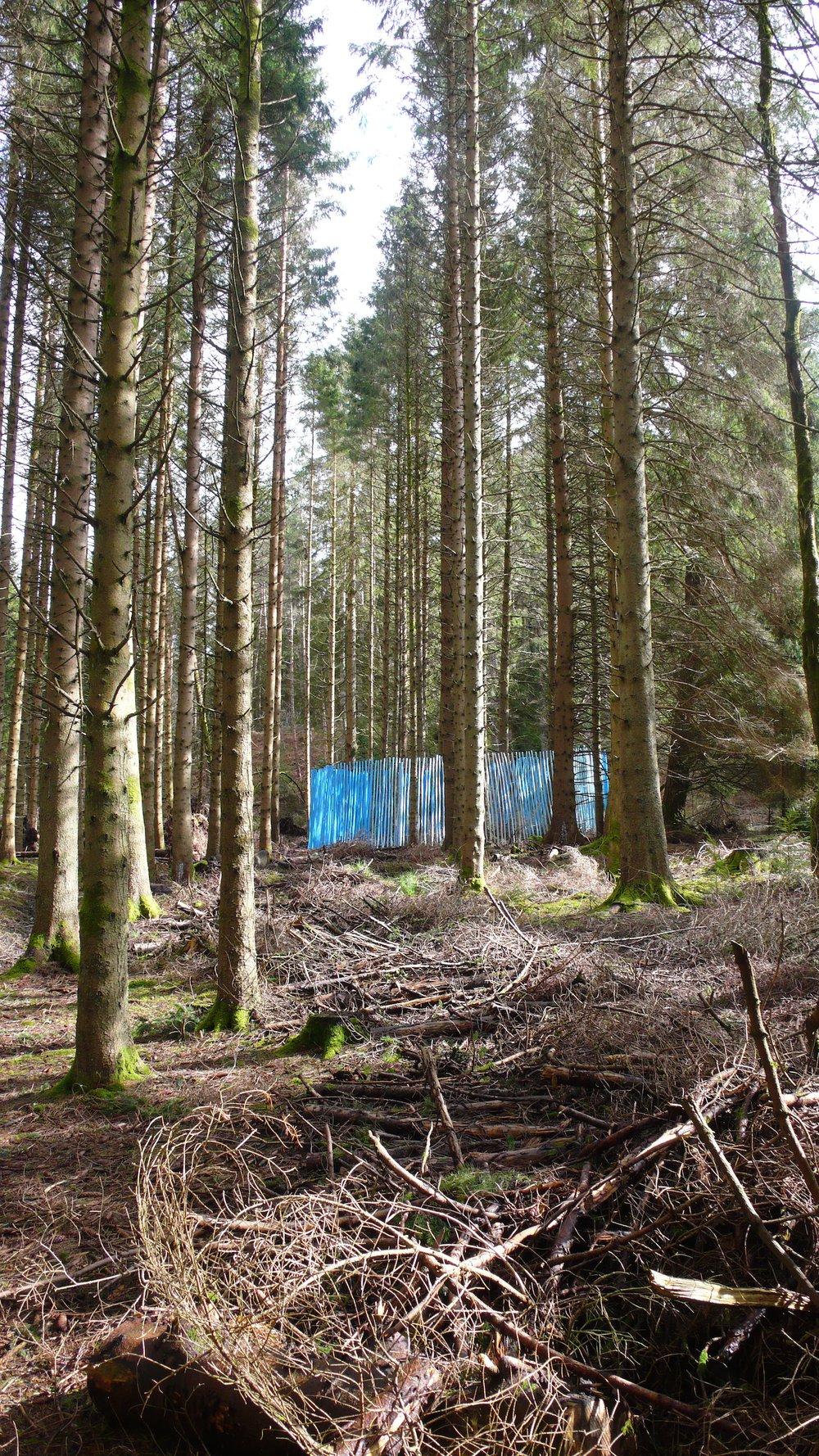 The Grass Seemed Darker Than Ever, Kielder Forest, Northumberland, 2016