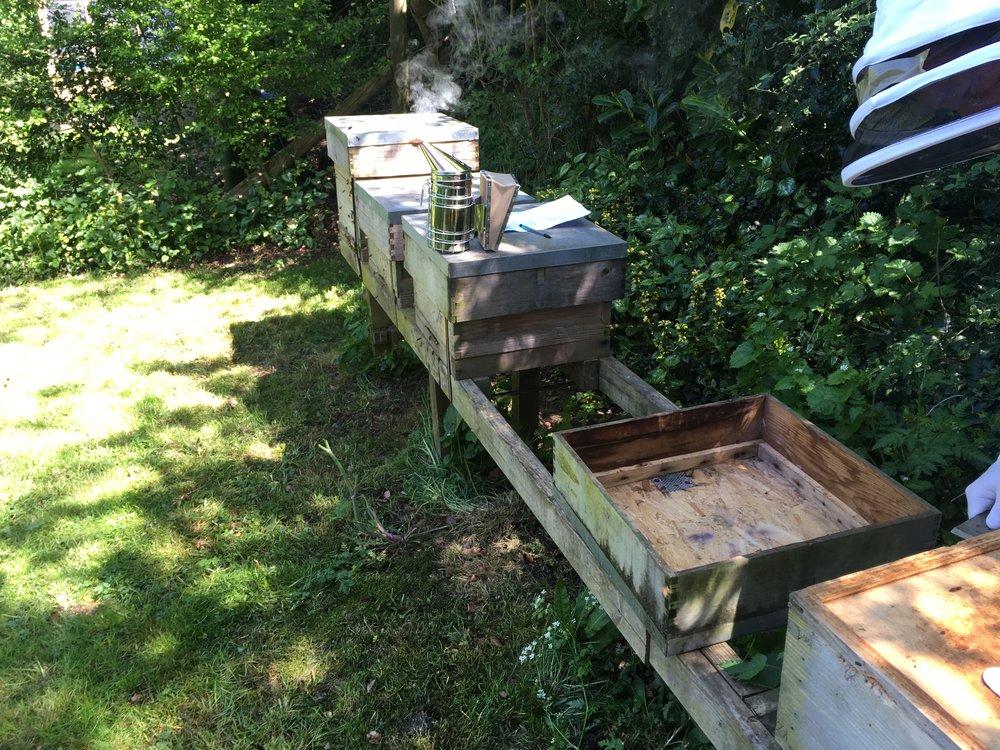 Field work - bee keeping with David Collingbourne.
