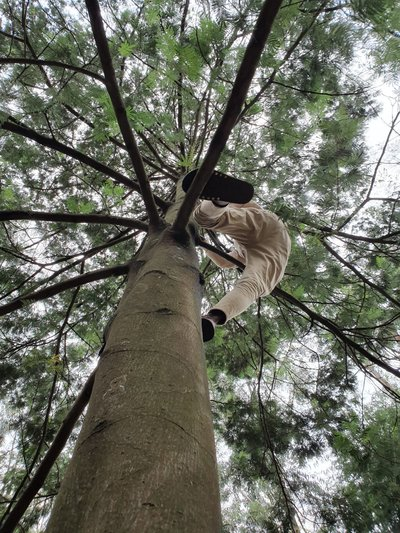 Man climbing a tree in  Forest in Bahir Dar