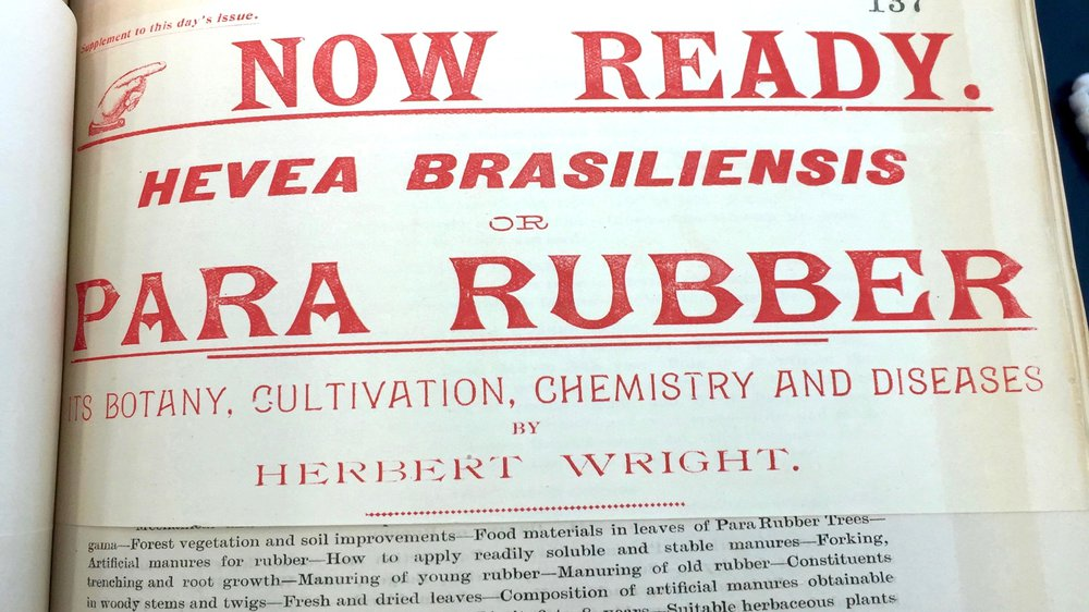 Hevea brasiliensis or Para Rubber: Its Botany, Cultivation, Chemistry and Diseases by Herbert Wright