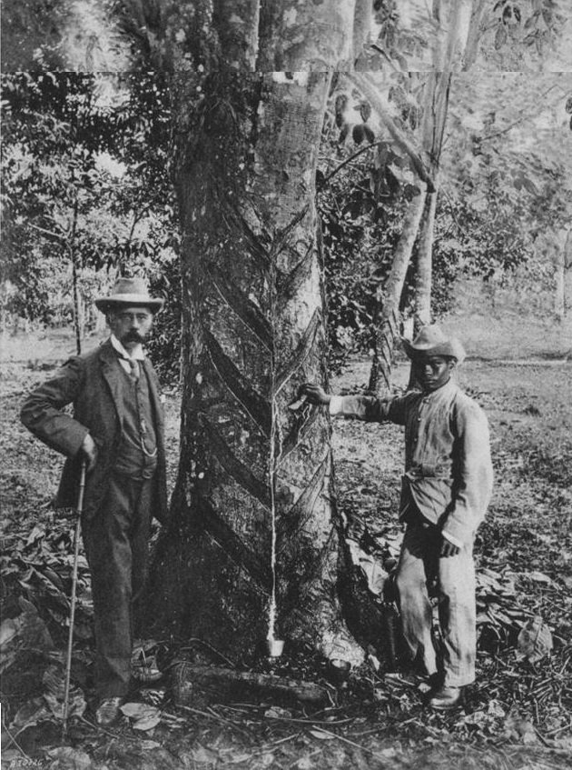 H. N. Ridley with a Hevea tree showing herringbone tapping