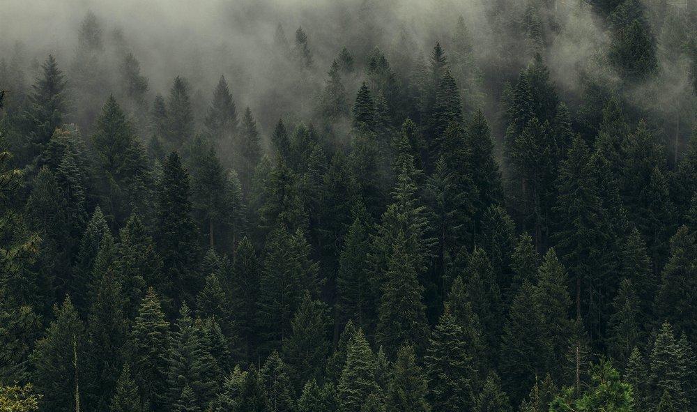 LFP Renewable Forest Feedstock