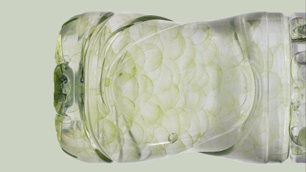 algae on polymer balls in water bottle