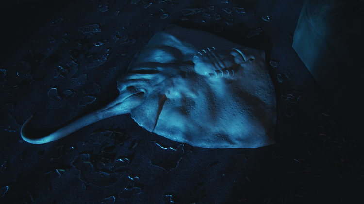 a photograph of a sting ray lying on its back surrounded by broken glass