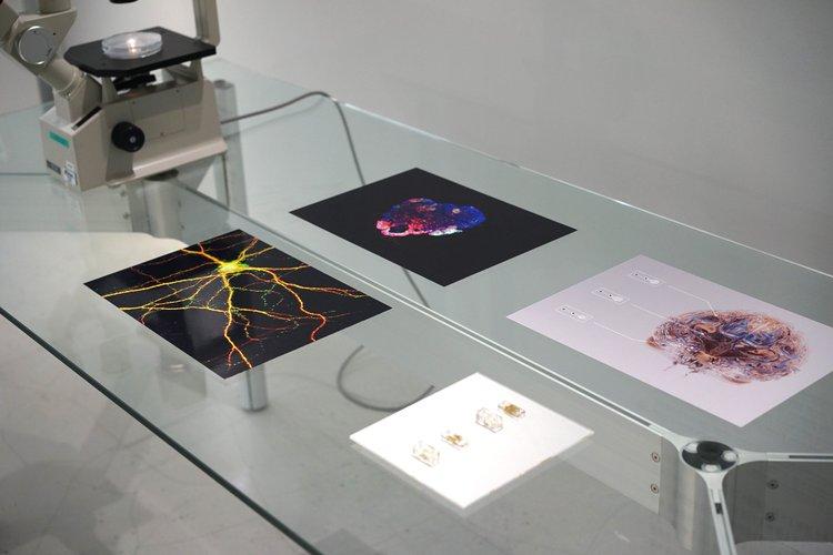 RCA-IIS Tokyo Design Lab