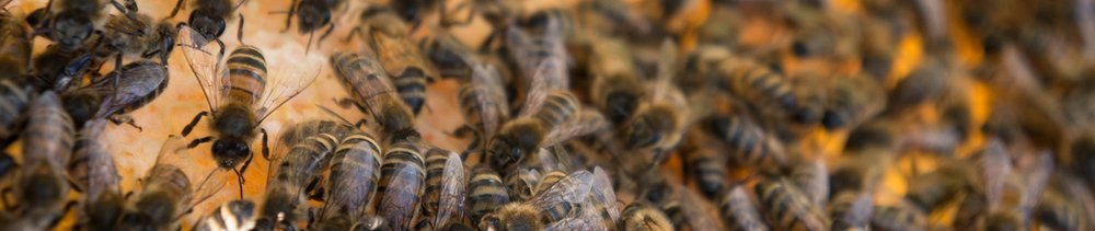 The self-monitoring honey bee hive
