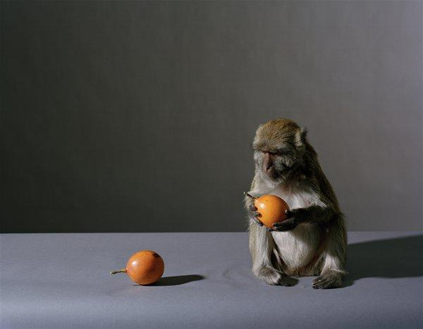 Portrait of a Monkey with Fruit