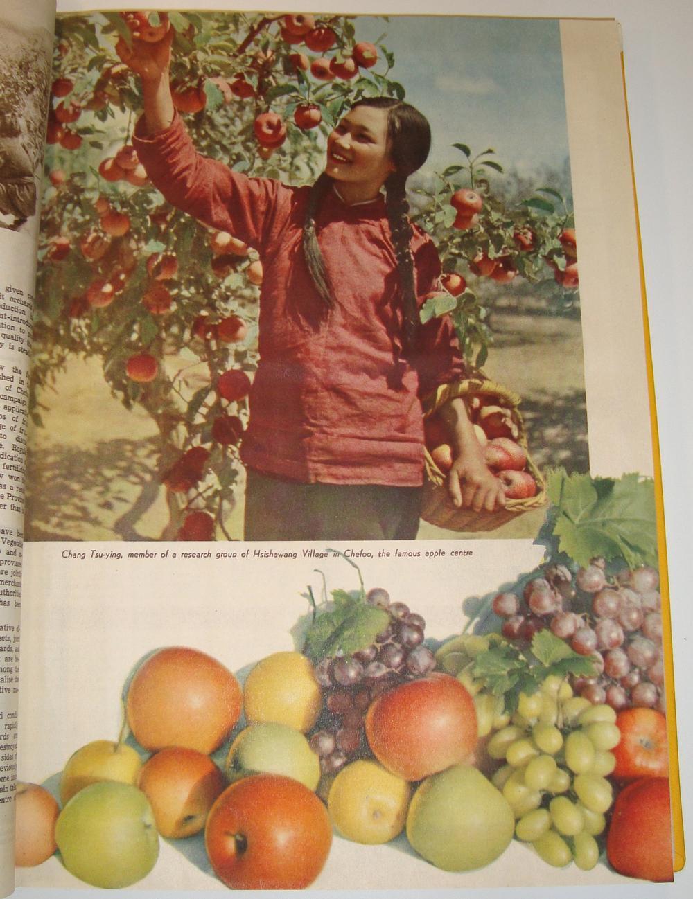 China Pictorial, November 1951