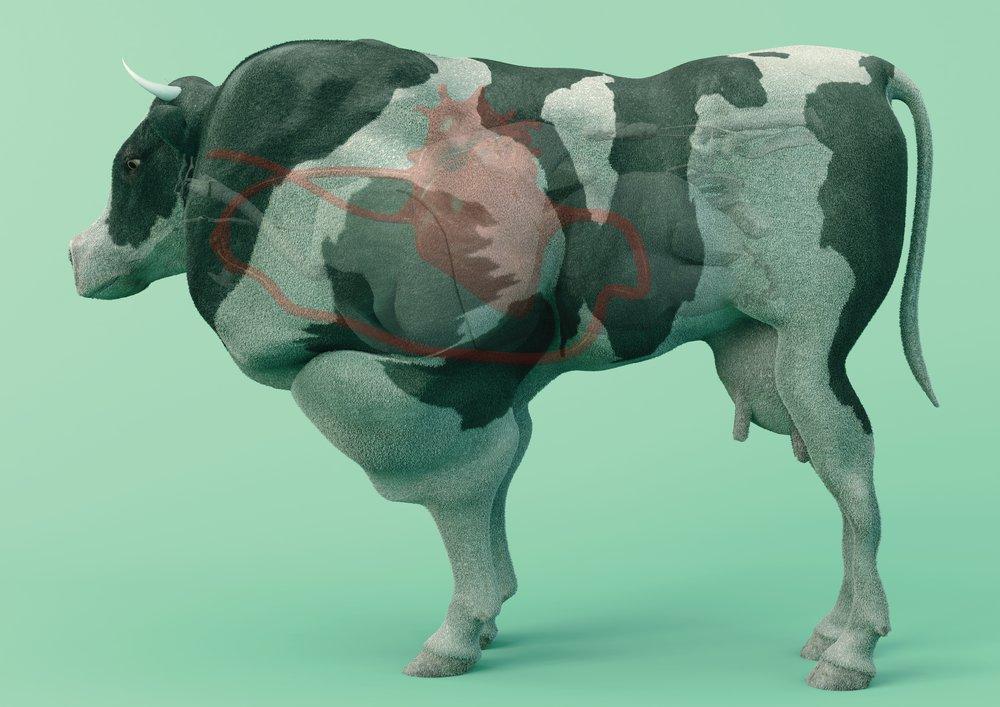 Cow of Tomorrow