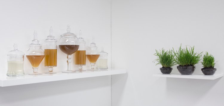 glass jars and grass in an installation by Albeiro Rojas Tomedes