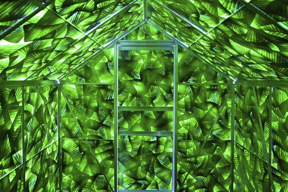 green rhizome