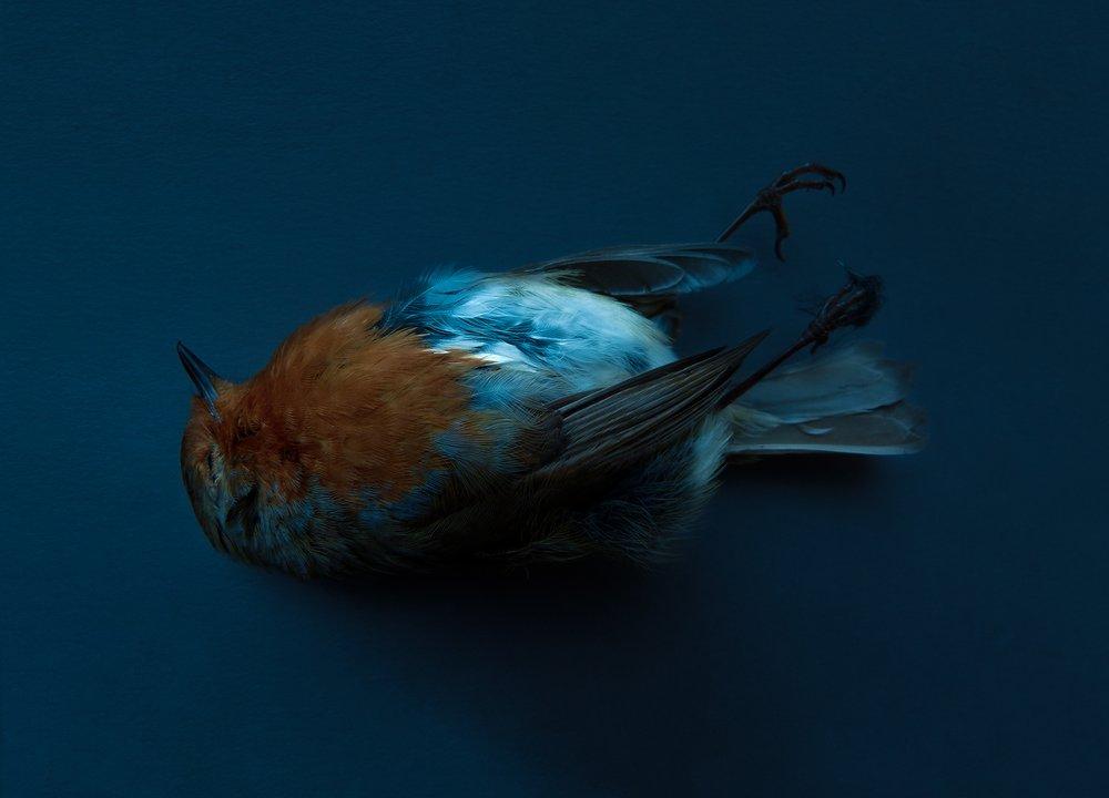 Untitled (Robin)