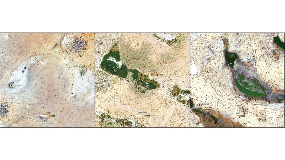 Desert/Grassland/Wadi - Transformations