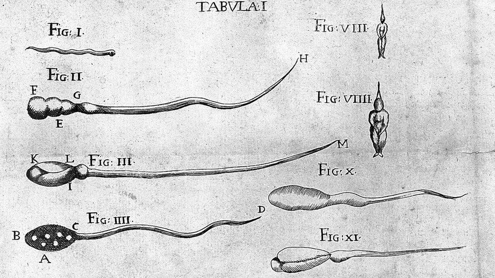Figures of homunculi in semen